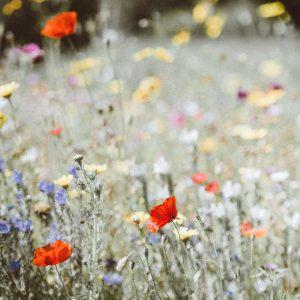 Misturas de flores